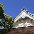 Photos: 五月晴れに新緑