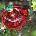 硝子の林檎