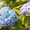 Photos: 青紫