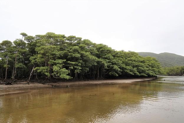 Photos: 仲間川