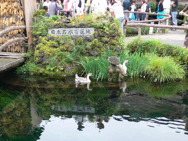 Photos: 忍野八海
