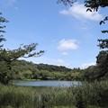 Photos: 森と泉