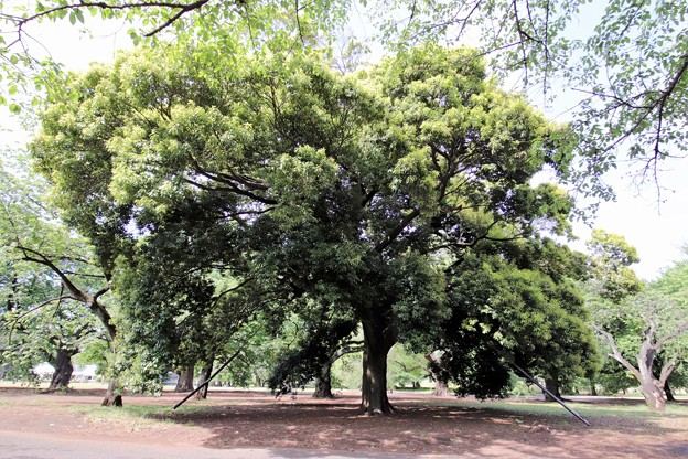 Photos: 都心の樹林