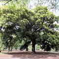 都心の樹林