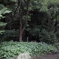 Photos: 森の入口