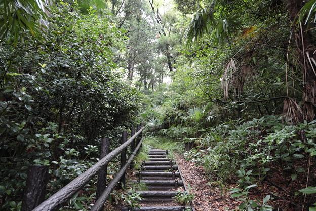 Photos: 森の階段