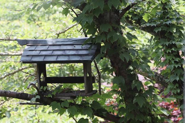 Photos: 鳥の小屋