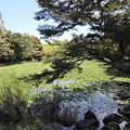 Photos: 水草茂る