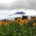 Photos: 花の都公園