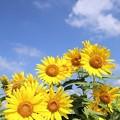 太陽の恵み