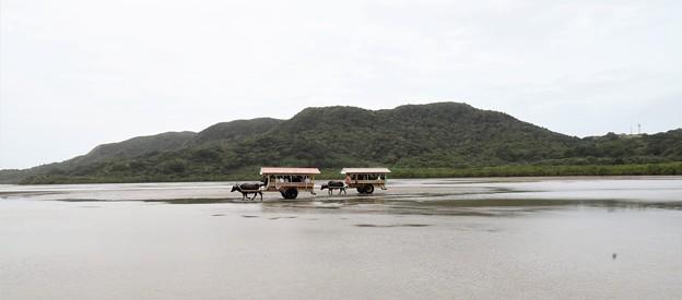 Photos: 水牛車