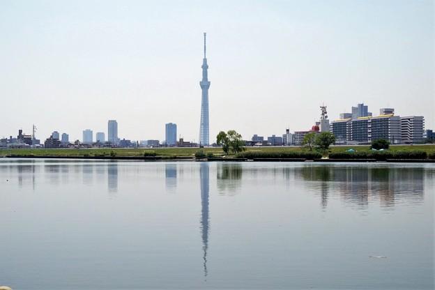 Photos: 荒川河川敷
