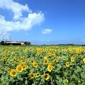 向日葵ガーデン
