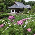 Photos: 花の寺