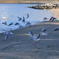 Photos: 東京の浜辺