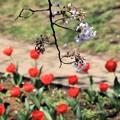 Photos: 春の季節