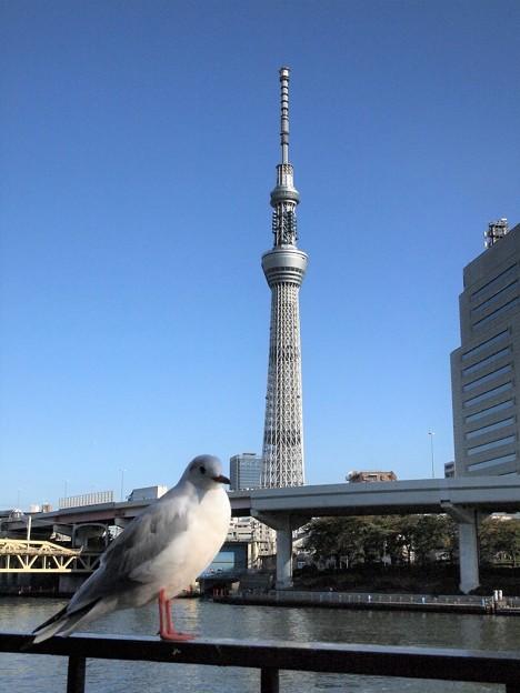 Photos: 鳩