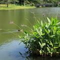 Photos: 大池