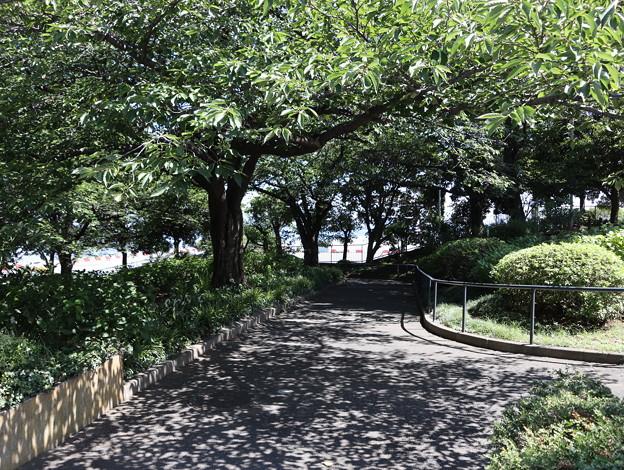 Photos: 真夏日