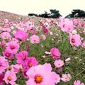 Photos: ひたち海浜公園