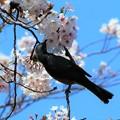 Photos: 春を感じて