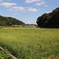 Photos: 稲田