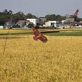 Photos: 収穫守