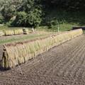 Photos: 収穫