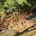Photos: 紅葉始まる