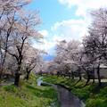 Photos: 忍野の春