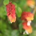 Photos: 小さい秋