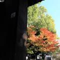 Photos: 秋めく