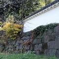 Photos: 皇居