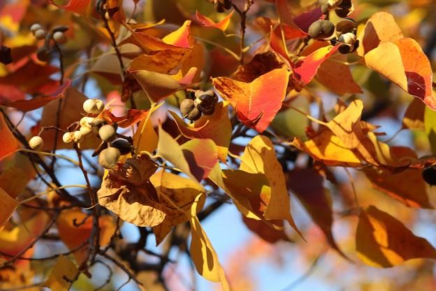 Photos: 秋の実
