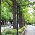 Photos: 山下公園前