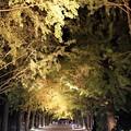 Photos: 昭和記念公園