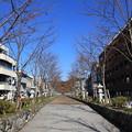 Photos: 冬の鎌倉