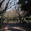 Photos: 公園並木