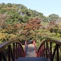 Photos: 紅葉橋
