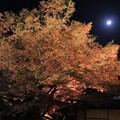 Photos: 月灯り