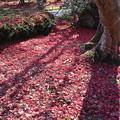 Photos: 紅に染まる