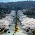 Photos: 富士霊園