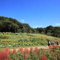Photos: 里山ガーデン