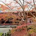 Photos: 京の秋