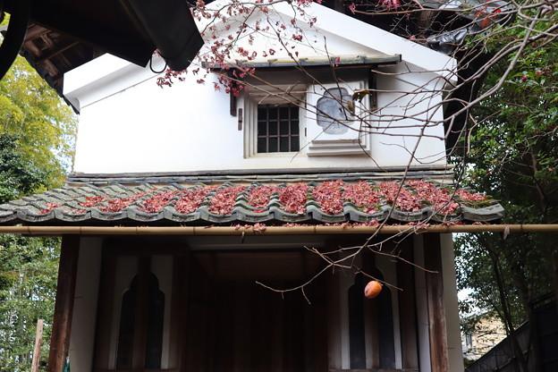Photos: 落葉