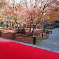 Photos: 圓光寺