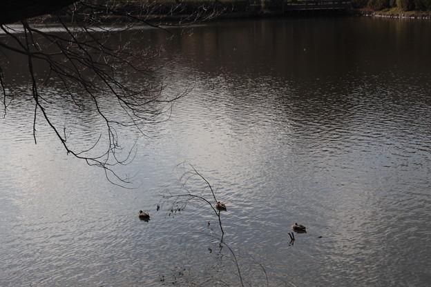 Photos: 三ツ池公園