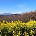 Photos: 吾妻山公園