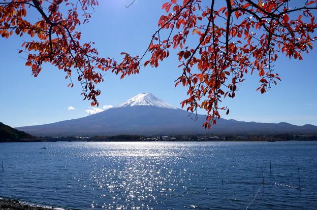 河口湖紅葉