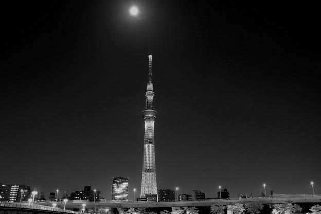Photos: ムーンライト